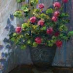Susan's Geranium - Pastel